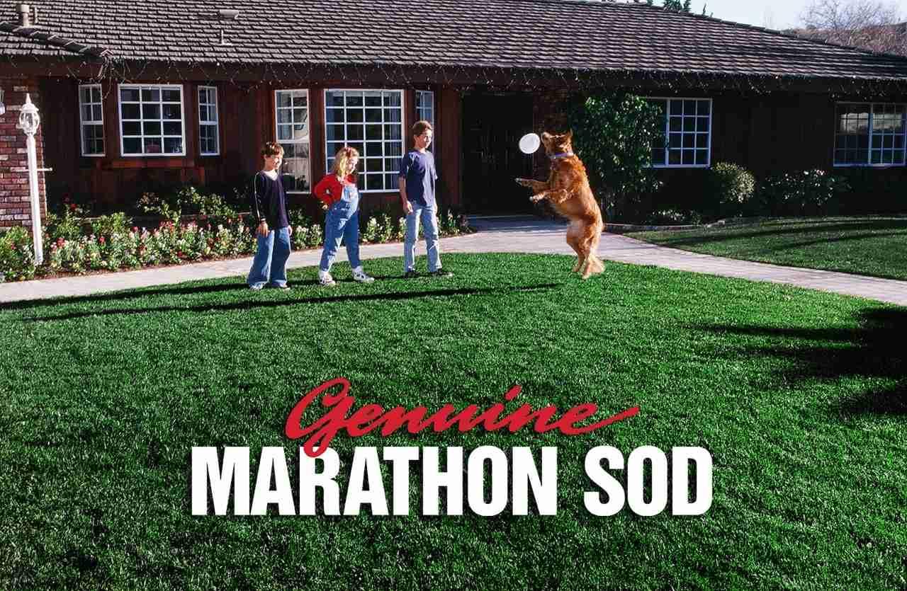 Marathon_image-1-min