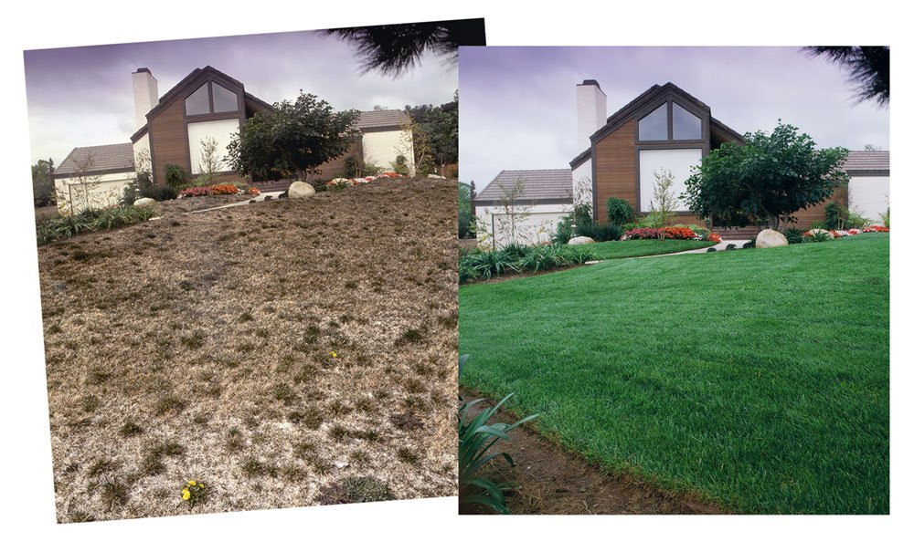 Has Your Lawn Become A Weed Infested Patch Of Brown Is It One The First Things People Notice About Home Fortunately S Easy To Re Lasting