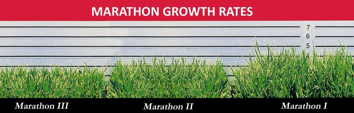 Marathon-Growth-Rates